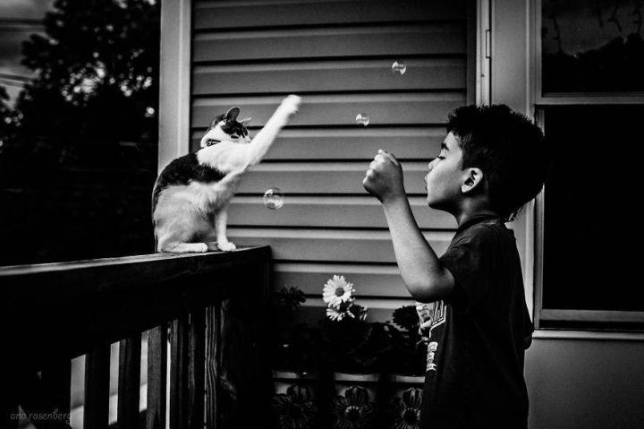 children-cat-playing-photography-15_result