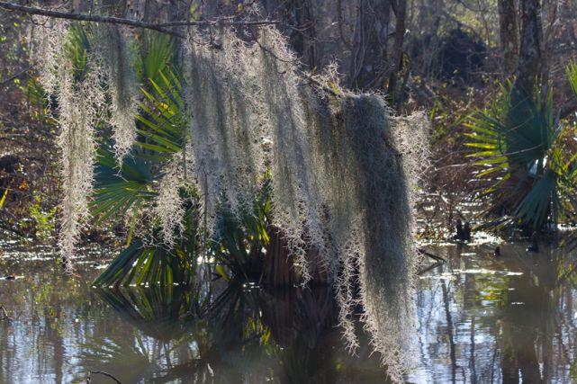 manchac_swamp(flickr.com-jkiel)-2