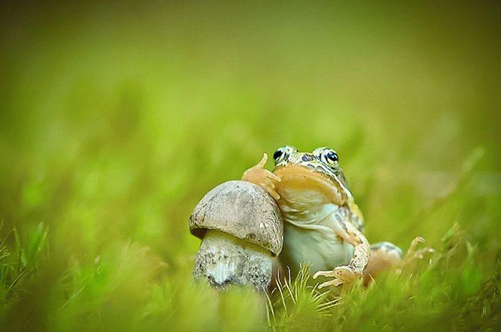 mushroom-photography-vyacheslav-mishchenko-37c_result