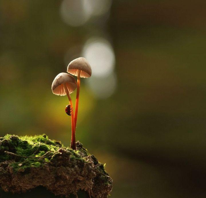 mushroom-photography-vyacheslav-mishchenko-4_result