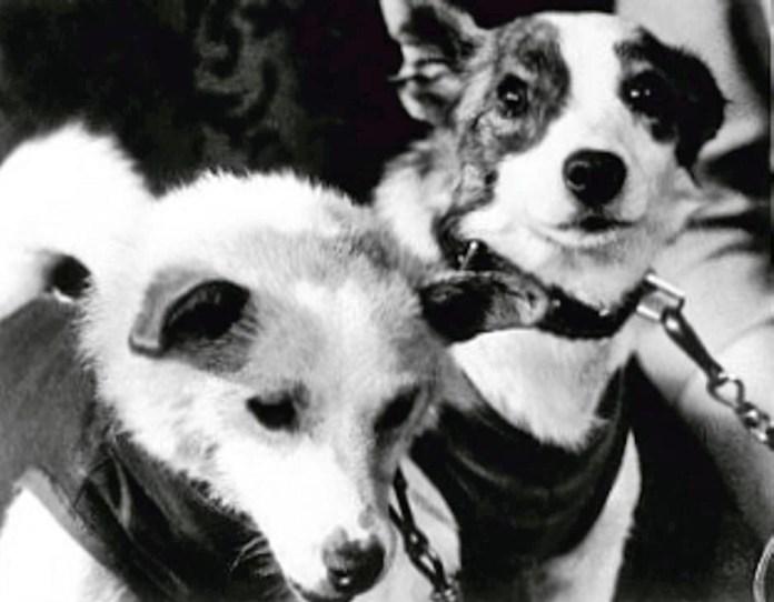 Собаки-космонавты