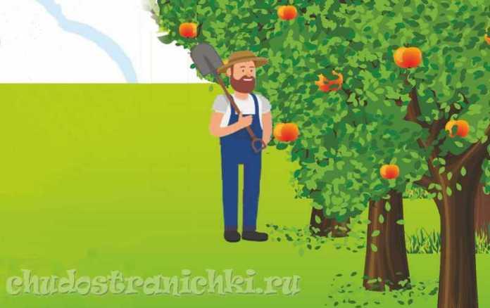 непослушное яблоко
