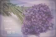 Lavender09