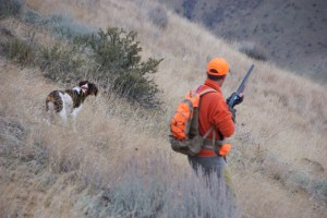 Angus pointing chukar