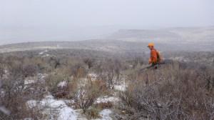 Snowy chukar hunt in the Owyhees