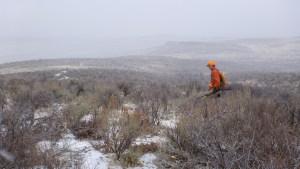 Owyhees chukar habitat