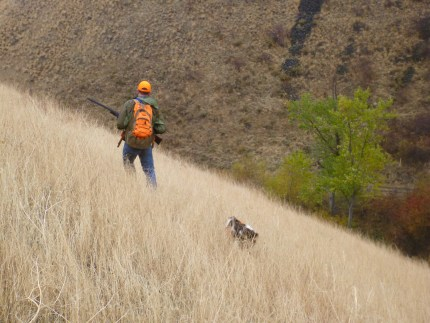 Man and dog hunting chukar
