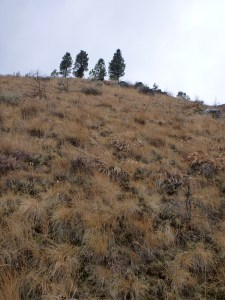 Steep hill for chukar hunting