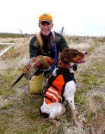 Brittany and pheasant