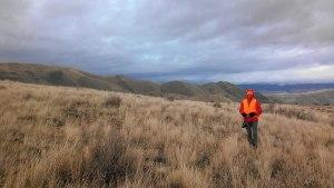 Chukar hunting near Brownlee