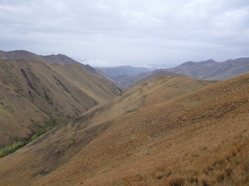 Somewhere out there, chukar hunker