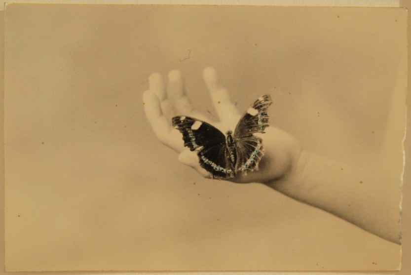 "gilliflower: "" hotparade: "" Masao Yamamoto "" ""i dream that i am a butterfly and pray that there is a butterfly dreaming he is me"" - raymond queneau """