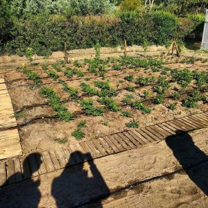 Plant sunday. http://ift.tt/2pkeoqX