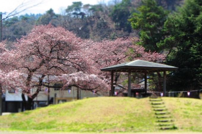 桜お花見スポット戸倉上山田温泉中央公園