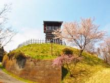 千曲市桜の名所お花見スポット城山史跡公園荒砥城跡
