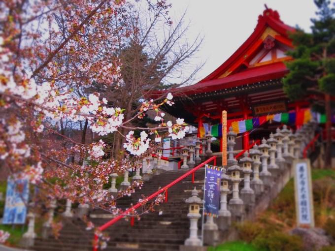 城泉山観音寺桜の名所