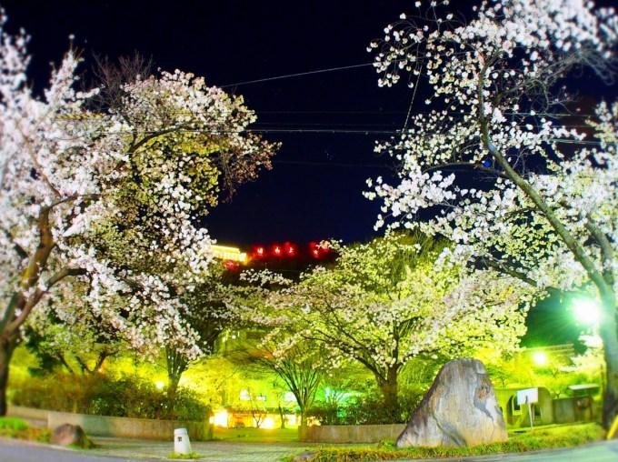 千曲市桜満開お花見戸倉上山田温泉中央公園