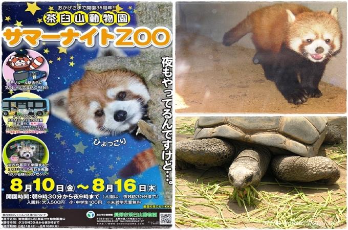 長野市茶臼山動物園サマーナイトZOO