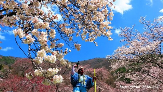 桜満開戸倉キティパーク