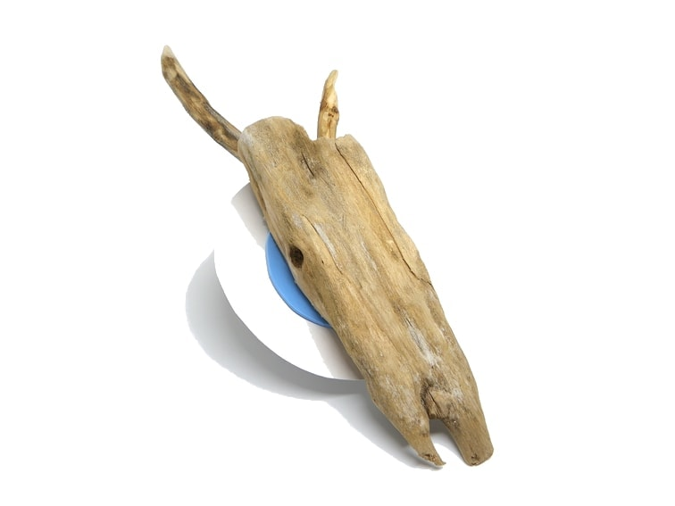 Recreación de un cráneo de antílope usando un fragmento de madera de deriva