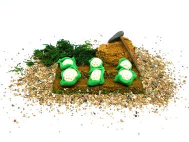 miniatura decorativa para el belen de un huerto de coliflores