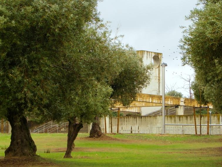 olivar de la hinojosa y estructura estufa fria en el parque juan carlos I