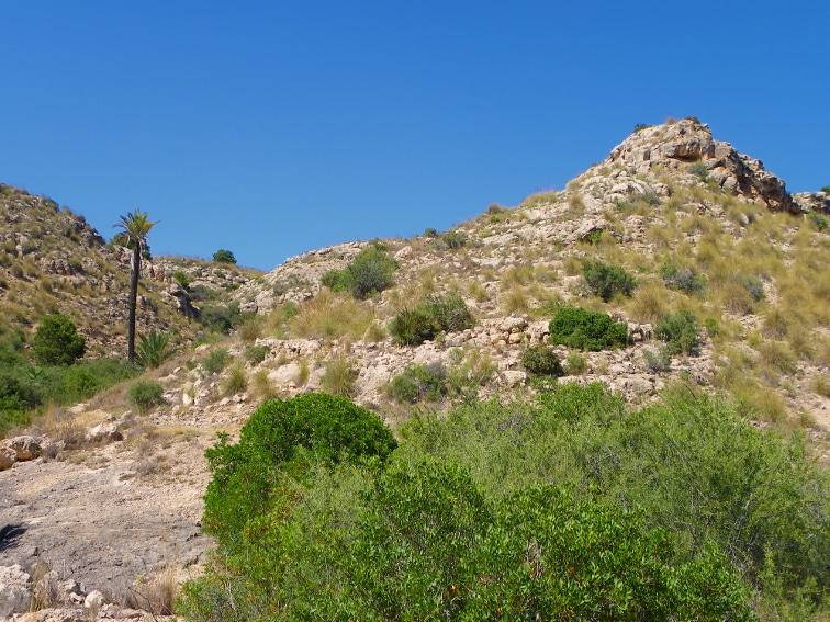 zona caracteristica con palemera y pico en el interior del barranco de la tia amalia santa pola