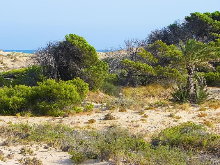 dunas y pinadas en el parque natural de las salinas de santa pola