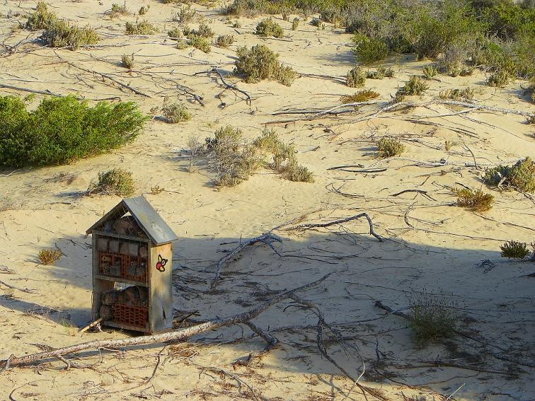 refugio de insectos beneficiosos en el parque natural de las salinas de santa pola