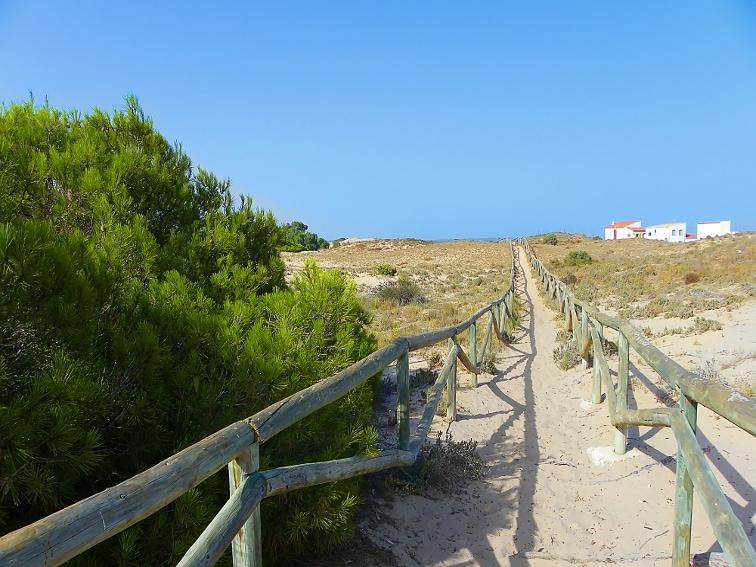 sendero entre dunas en el interior del parque natural de las salinas de santa pola