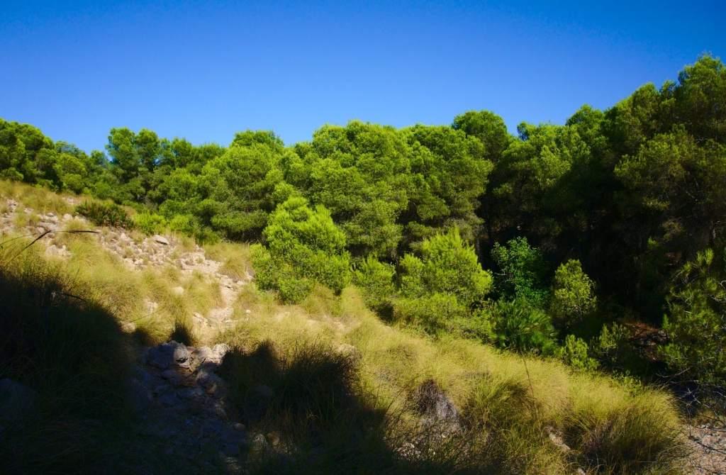 ladera y pinada en el barranco de paco mañaco santa pola