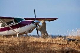 polar-bear-and-plane--churchill-wild-Richard-Voliva