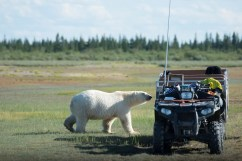 polar-bear-at-atv-nanuk-jad-davenport