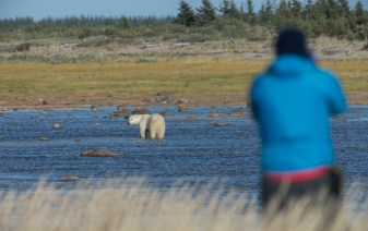 polar-bear-in-river-nanuk-polar-bear-lodge-robert-postma