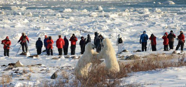 polar-bear-photo-safari