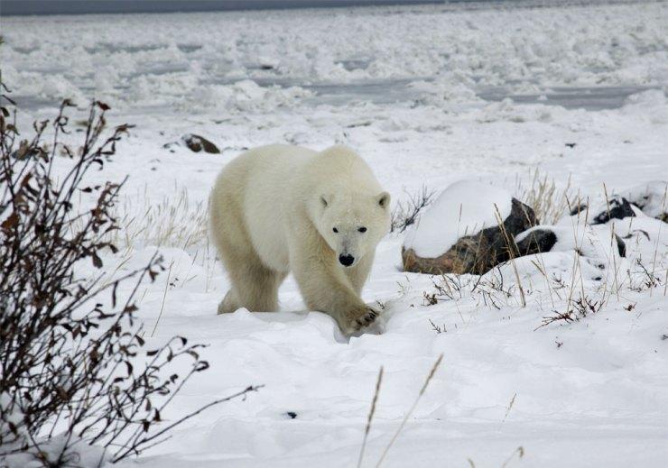 polarbearbespoketravel