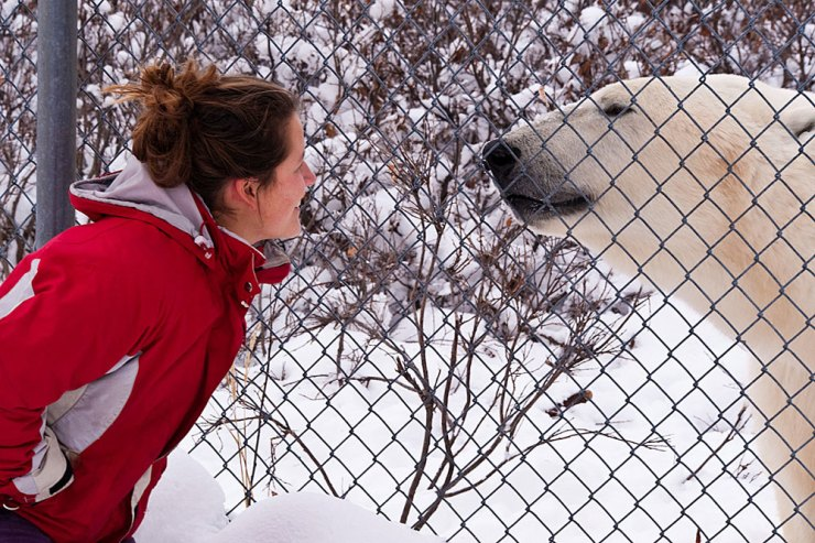 Up close and personal on the Great Ice Bear Adventure. Dennis Fast photo.