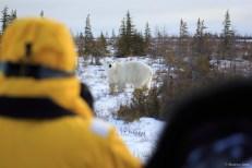 Polar bear and people on Great Ice Bear Adventure.
