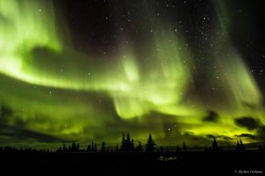 Northern lights at Nanuk Polar Bear Lodge.