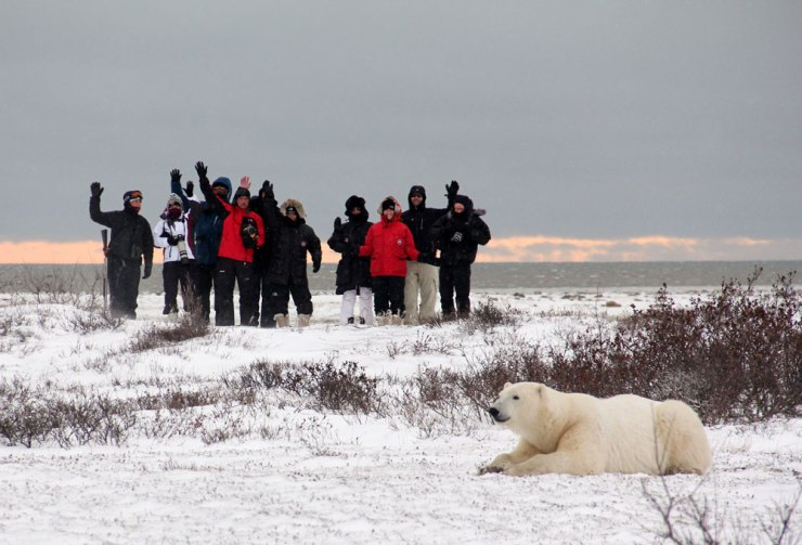 The polar bear and the people. A true story.