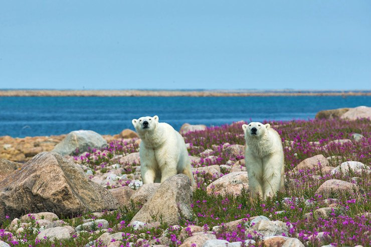 polarbearshubbartpoint