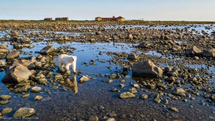 polarbearrockswatersealrive