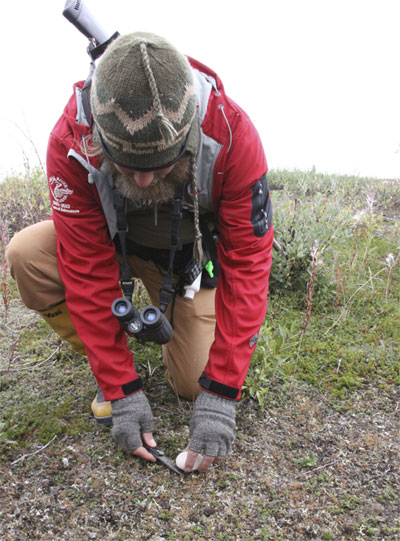 Churchill Wild guide Terry Elliot plucks a wild mushroom from the tundra. Jennifer Ennion photo.