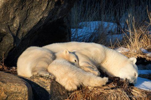 Cuddles. Rimma Aranov.