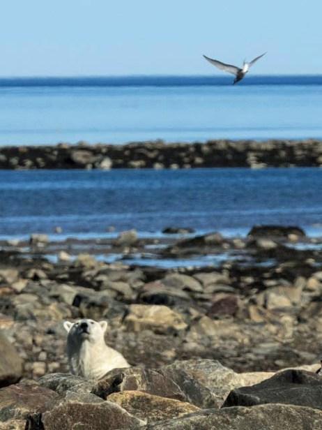 polarbearandbird