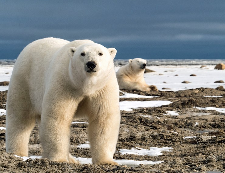 Up close and personal at Dymond Lake Ecolodge on the Great Ice Bear Adventure. Virginia Huang photo.