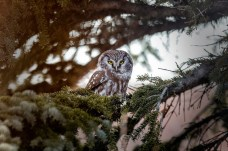1st Place Wildlife - Brenda Neary