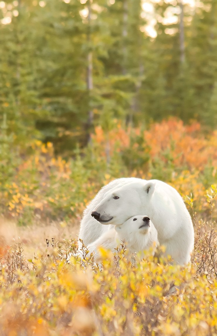Autumn snuggle. Nanuk Polar Bear Lodge. Ramona Boone photo.