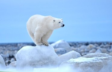 polar-bear-balances-on-ice-rock-Seal-River-Heritage-Lodge-Ian-Johnson