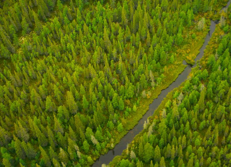 The calm and soothing boreal forest.